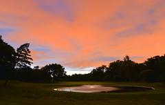 August Night (Kojaniemi) Tags: cloud pond fountain water grass kojaniemi kimmoojaniemi golfcourse tree summer august summernight night swan dusk