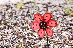 Hail (rsoputro) Tags: red windmill garden hail
