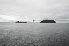 Moving (Matteo Andreozzi) Tags: iceland westmann elliaey seagull solitude landscape sea sky clouds fog island islands cold summer view nikon d70 national geographic bird maths