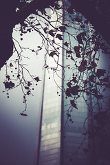 Leafy Shard (Fairy_Nuff (new website - piczology.com!)) Tags: tree london glass leaves silhouette architecture berries shard