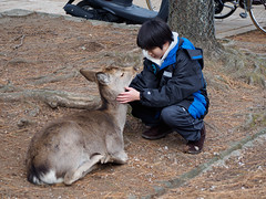 A boy and his deer (scottylosophy) Tags: japan deer nara