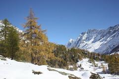 Lotschental ,vers  le fond de la valle (luka116) Tags: berg montagne automne schweiz switzerland suisse swiss svizzera paysage moutain wallis octobre valais montagnes 2014 valle lotschental fafleralp