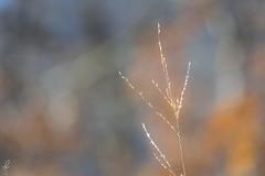 Nature (ila bernie) Tags: wild italy dog pet mountain lake snow alps church nature animal animals cane foglie montagne puppy landscape lago switzerland town leaf nikon italia peace place little bokeh magic confine peaceful natura chiesa pace monte pup scape provincia alpi varese posti luce paesaggio controluce magia zoll intothewild dogana contro monteviasco viasco d5300