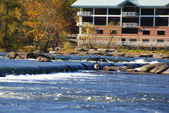 The James River at Belle Isle (Me in Va) Tags: water virginia geese whitewater fallcolors bluesky richmond rapids va pipeline clearsky rva jamesriver rushingwater mostlyclear