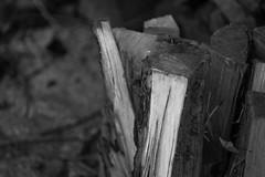 split wood, woodpile, shallow depth of field, Asheville, Nikon D40, deJur 135mm f-2.8, 1.21.15 (steve aimone) Tags: wood blackandwhite monochrome asheville monochromatic pile split woodpile verticality shallowdepthoffield primelens nikond40 dejur135mmf28
