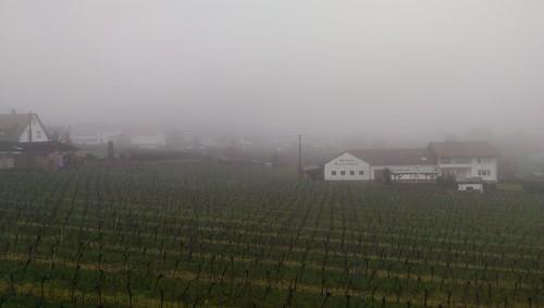 348/365 Guten Morgen Pfalz