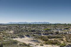Dune landscape (Oddiseis) Tags: mountains tree beach valencia silhouette pine skyline coast spain bush horizon dune litoral ecosystem naturalpark biotope elsaler ladevesa valenciancommunity serradecorbera serradelesagulles serradelamurta elmondver parcnaturaldelalbuferaielsaler