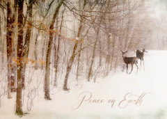 Merry Christmas Flickr People! (Explored) (lclower19) Tags: snow deer text texture nikon d90 composite kimklassen orton odt naturalist