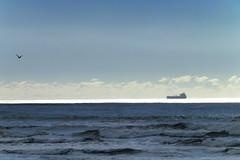 White stripe of sea (imajane) Tags: sea newzealand gull tanker newplymouth 2014 imajane dscf0649whitestripeofseawithtankerandgullbrtop