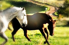 Hoss & Beth (Chamblin1) Tags: horses pasture