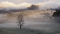 L'Hte / The Host (Pierre-Paul Feyte) Tags: morning mist cold tree fog pentax campagne arbre froid brouillard fort bois brume gascony matin aube pr gascogne gers grassfield pavie fantasticnature arbreisol lassran