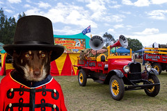 The Ringmaster (aussiegall) Tags: carnival dog tents ally circus theme ringmaster householdpets week352