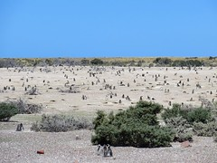 Puerto Madryn-87