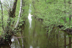 Water way (johanssoneva) Tags: tree water way vatten trd varberg vg fotosndag strfrfarm fs160515