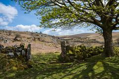 Spring on Dartmoor_NK2_1864 (Jean Fry - still trying to catch up) Tags: uk trees spring devon nationalparks stonewalls dartmoor moorland westcountry gateways englanduk dartmoornationalpark
