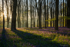 Woodland Dawn (Mike_Sowerby) Tags: uk morning flowers trees light england bluebells forest sunrise dawn early woods day break hampshire micheldever