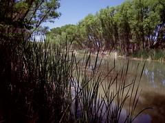 Verde River near Jail Trail (EllenJo) Tags: pentax cottonwoodarizona 2016 june19 jailtrail 86326 ellenjo ellenjoroberts pentaxqs1