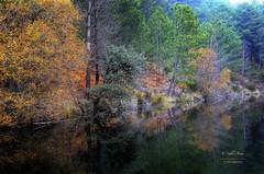 (139/16) El lago de los espejos II (Pablo Arias) Tags: pabloarias espaa spain hdr photomatix nx2 photoshop texturas elvalledeltietar laadrada avila comunidadcastillalen pinos rboles colores