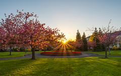 Sun flare, Alexandra Gardens, Cathays Park, Cardiff. (technodean2000) Tags: park flowers sunset sun tree gardens nikon cardiff alexandra flare cathays d610