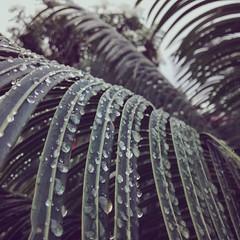 serenidade (luageminiana) Tags: valencia tristeza plantas lavanda diachuvoso instagram