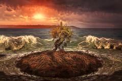 lonely island (Chrisnaton) Tags: ocean sunset sea tree landscape island coast sand waves sundown surreal isolation forsaken eveningsky isle afk outthere secretisland eveningmood littleisland