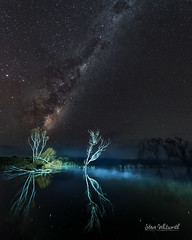 Ghost Gums (Steve Whitworth) Tags: australia tasmania northerntasmania evandale southeskriver astrophotography stars milkyway reflection lightpainting nikon nikond800e nikon1424mmf28
