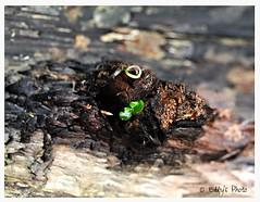 Germoglio in un tronco cavo (Elly212) Tags: wood verde green 50mm log italia bokeh trunk tronco palo sprout leno trentino legno brote botn germoglio