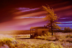 Magenta Sky ( julev69  1,925,000+ Views- THANK YOU!) Tags: sky beach clouds golden artistic maine creative magenta land streaks yellowtree paintedsky naturephotography landscapephotography naturephotographer funwithphotos landscapephotographer abovealltherest julev69 julieeverhart