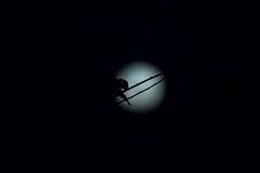0Z4A1341 (francois f swanepoel) Tags: werewolf werewolve annunaki draculamaan draculamoon fullmoon moonoverbourbonstreet sting volmaan weskaap westerncape dracula waxing