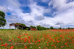 Barn in the poppy meadow (Colin Hollywood Photography) Tags: uk red england sky cloud field barn chalk nikon meadow poppy wiltshire wessex d810 1424mm