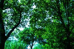 FA_016 (Dutch_Chewbacca) Tags: nature netherlands spring fort sunny dijk brabant 1877 landschap 1880 waterlinie nieuwe 1847 altena brabants hollandse uppel gantel uppelse schanswiel