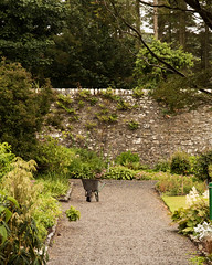 Day 6 28 Logan Botanic Garden in the rain (bob watt) Tags: uk june canon scotland 7d 2016 18135mm loganbotanicgarden canoneos7d kirkcudbrightholidayjune2016