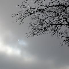 o (vertblu) Tags: winter sun silhouette clouds mood moody silhouettes atmosphere calm minimal minimalism simple twigs darkclouds calmness ambiance meditative transcending 500x500 minimalismus baretwigs simplenature oaktwigs vertblu