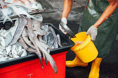 Fresh fish at the local market of George Town (Evgeny Ermakov) Tags: street red fish man green wet water yellow work asian town george bucket hands asia southeastasia raw hand boots market body vibrant traditional culture plate stall georgetown fresh part gloves seafood worker marketplace local wellingtonboots southeast typical bodypart wellingtons streetmarket marketstall wetmarket wellingtonboot