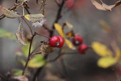 IMG_6425 (ShellyS) Tags: nyc newyorkcity fall centralpark manhattan parks foliage