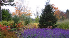 Fall colors at the Chicago Botanic Garden. (visiblejoy) Tags: autumn trees red orange tree fall grass leaves pine illinois october purple lavender il glencoe chicagobotanicgarden walkingtrail annsullivan visiblejoyphotography