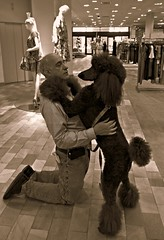 Slow Dancing in Neiman Marcus.....Explore #32 (Midnight and me) Tags: dog love eyecontact mannequins explore poodle midnight hugs neimanmarcus standardpoodle slowdancing coutour blackstandardpoodle ladiesclothes midnightandme littledoglaughedstories