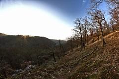 Zur Burg (derherrblutbart) Tags: berg abend nebel herbst natur landschaft wald wandern falkenstein harz tal burg pfad selketal meisdorf