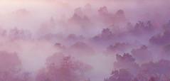 foggy oaks (artfilmusic) Tags: foggy oaks