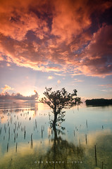 Flare (bunadski) Tags: sunset red clouds sunrise intense mangrove flare siquijor