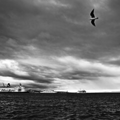 3 (antekatic365) Tags: sea blackandwhite port nikon harbour seagull croatia split luka hrvatska dalmatia ante galeb gradska katic d3100