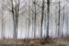 Misty wood (ElmerstarK) Tags: wood mist france fog forest bourgogne brouillard forêt bois brume villerslespots