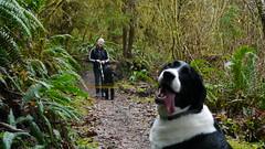 Quinault Rainforest (LeeLeFever) Tags: green dogs rain outdoors rainforest hiking olympicpeninsula maybe lush washingtonstate washingtoncoast bosco cascadia quinault copalisbeach boscolefever maybelefever coastpost