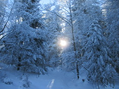 Feu et Glace (Photographer ninja) Tags: nature alpes soleil hiver neige froid fort glace sapins