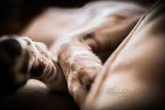 Buddy (tamsin_philip) Tags: dog pet jack jrt russell buddy paws