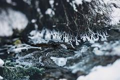 Millcreek ice (Elle_Zee) Tags: lensbaby edge 80