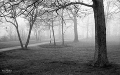 Cliffview Park (Brian Copeland Photography) Tags: park ca trees blackandwhite bw plants cloud white mist plant ontario canada tree film monochrome weather misty fog clouds 35mm bench blackwhite exterior outdoor furniture air hamilton foggy ilfordhp5 northamerica 135 fullframe parkbench ilford moisture moist selfdeveloped blackandwhitefilm ilfotecddx ilfordfilm cliffviewpark roll229