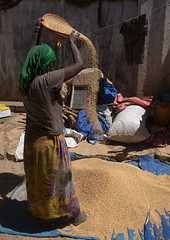 Woman sleving teff in the street, Harari region, Harar, Ethiopia (Eric Lafforgue) Tags: life africa people color vertical shop female shopping outdoors women place market sale labor traditional grain cereal culture unescoworldheritagesite business labour marketplace grains dailylife ethiopia sell sideview trade selling item humanbeing oneperson hornofafrica sorting eastafrica harar abyssinia tef ruralscene fulllenght harari teff 1people ethnicgroup harariregion sleving ethio162882