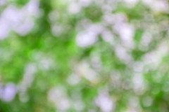 Blur image of abstract bokeh of green tree color (DomDew_Studio) Tags: park wood morning light summer sunlight plant abstract blur color tree green nature forest garden circle season daylight wooden leaf spring flora shiny colorful day pattern natural bright image bokeh vibrant background space empty sunny blurred nobody fresh foliage blank backdrop environment greenery glowing lush