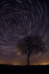 Star Trail (Dg.63) Tags: tree night circle star nuit arbre etoiles startrail nightonearth circumpolaire